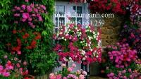 Nhà đẹp quyến rũ hơn nhờ thiết kế sân vườn độc đáo